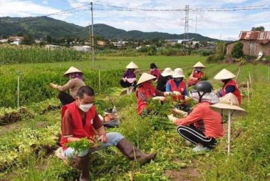 Nông sản từ Lâm Đồng